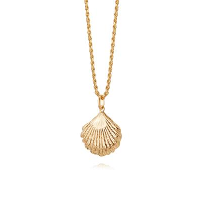 Buy Daisy Gold Large Shell Necklace